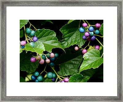 Porcelain Berries Framed Print by Lisa Phillips