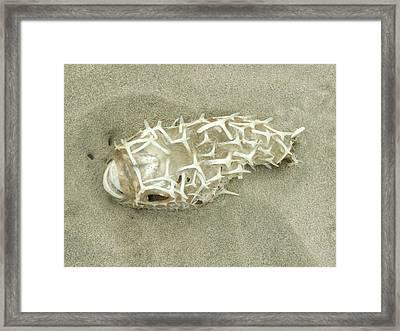 Porcupine Fish Framed Print by Peter-hugo Mcclure