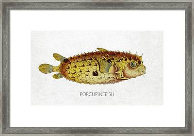 Porcupinefish Framed Print by Aged Pixel