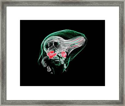 Porpoise Foetus Framed Print by Rebecca Summerfield/natural History Museum, London