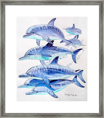 Porpoise Play Framed Print by Carey Chen