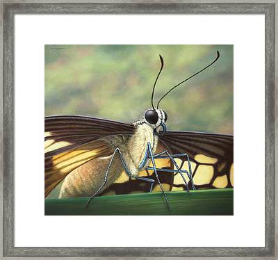 Portrait Of A Butterfly Framed Print by James W Johnson