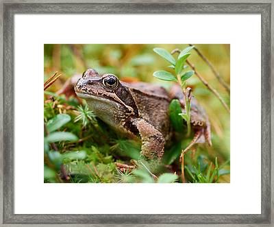 Portrait Of A Frog Framed Print by Jouko Lehto