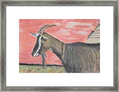 Portrait Of A Goat Framed Print by Renee Helin