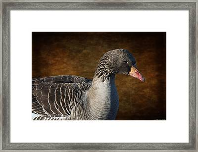 Portrait Of A Goose II Framed Print by Mary Machare