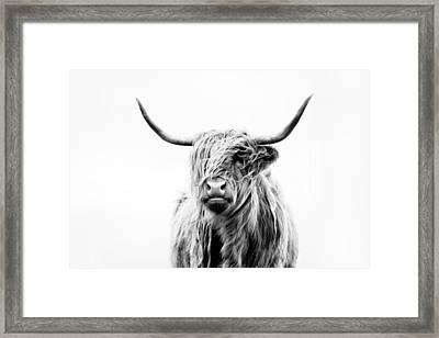 Portrait Of A Highland Cow Framed Print by Dorit Fuhg