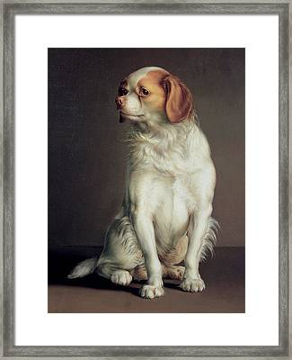 Portrait Of A King Charles Spaniel Framed Print by Louis Leopold Boilly