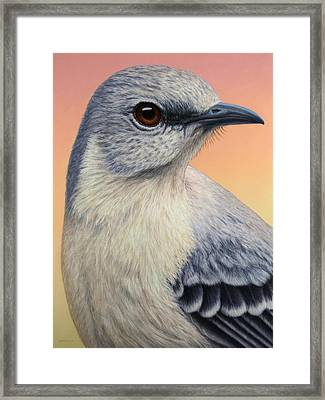 Portrait Of A Mockingbird Framed Print by James W Johnson