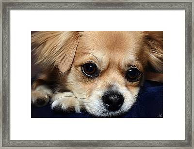 Portrait Of A Pup Framed Print by Lisa Knechtel