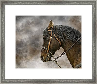 Portrait Of A Rope Horse Framed Print by Jana Thompson