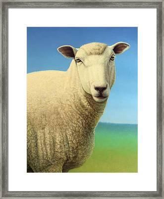 Portrait Of A Sheep Framed Print by James W Johnson