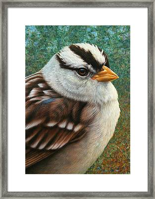Portrait Of A Sparrow Framed Print by James W Johnson