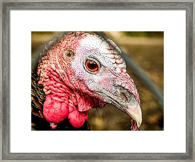 Portrait Of A Turkey Framed Print by Jim DeLillo