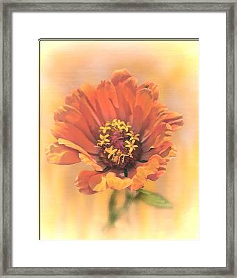 Portrait Of A Zinnia Framed Print by Larry Bishop