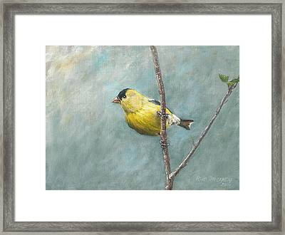 Portrait Of An American Goldfinch Framed Print by Rob Dreyer AFC