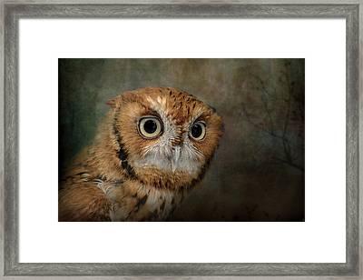 Portrait Of An Eastern Screech Owl Framed Print by Jai Johnson