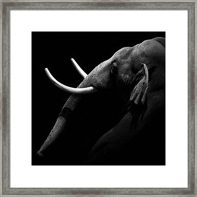 Portrait Of Elephant In Black And White Framed Print by Lukas Holas