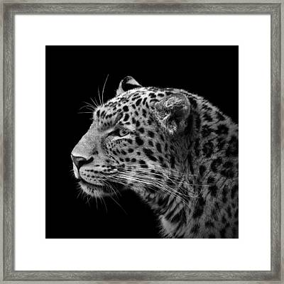 Portrait Of Leopard In Black And White IIi Framed Print by Lukas Holas