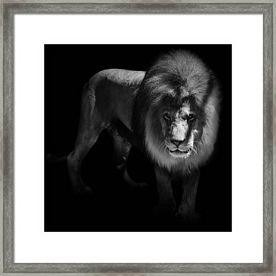 Portrait Of Lion In Black And White Framed Print by Lukas Holas