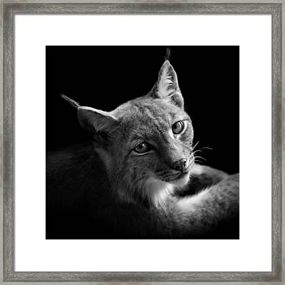 Portrait Of Lynx In Black And White II Framed Print by Lukas Holas
