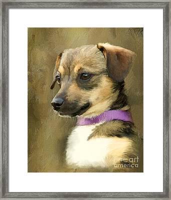 Portrait Of Maizie Framed Print by Jayne Carney