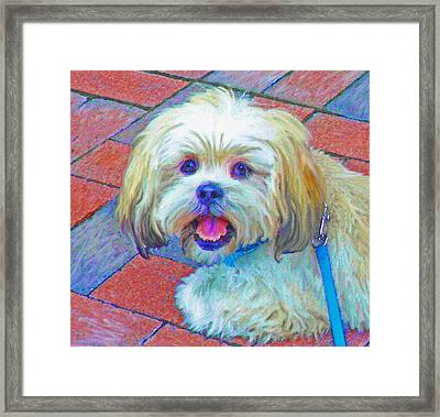 Portrait Of Shih Tzu Framed Print by Jane Schnetlage