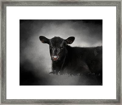 Portrait Of The Black Angus Calf Framed Print by Jai Johnson