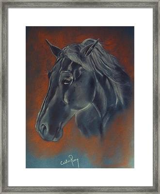 Portrait Study Of A Horse Framed Print by Callan Percy
