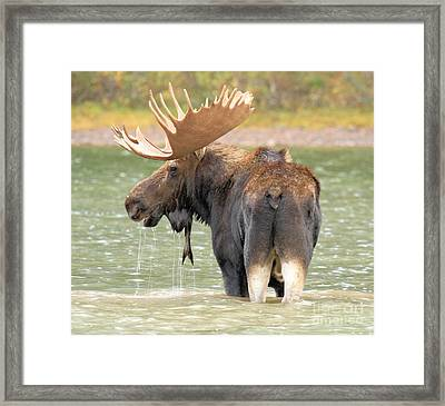 Posing In Fishercap Framed Print by Adam Jewell