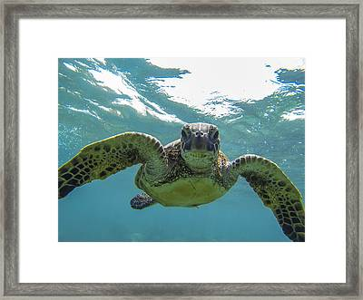 Posing Sea Turtle Framed Print by Brad Scott