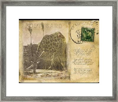 Postcard Giraffe Framed Print by Nichon Thorstrom