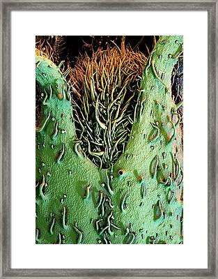 Potato Plant Flower Framed Print by Stefan Diller