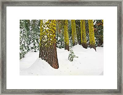 Potential - Winter Scene Of Badger Pass In Yosemite National Park Framed Print by Jamie Pham