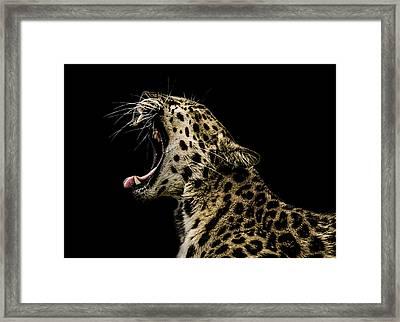 Jaded Framed Print by Paul Neville