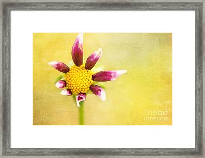 Power To The Flower Framed Print by Beve Brown-Clark Photography