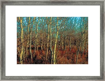 Prairie Autumn 8 Framed Print by Terry Reynoldson