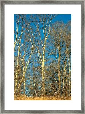 Prairie Autumn 9 Framed Print by Terry Reynoldson