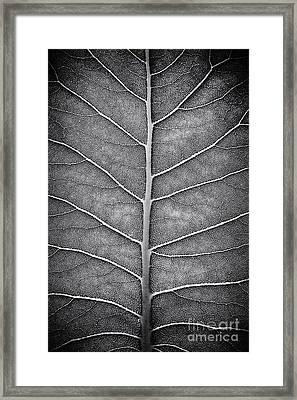 Prairie Dock Leaf Monochrome Framed Print by Tim Gainey
