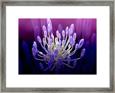 Praise Framed Print by Holly Kempe