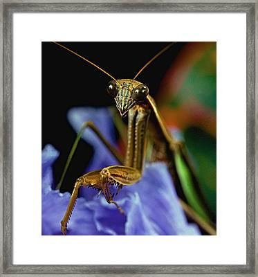 Praying Mantis  Closeup Portrait 3  On Iris Flower Framed Print by Leslie Crotty