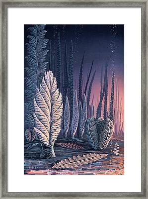 Pre-cambrian Life Forms Framed Print by Richard Bizley