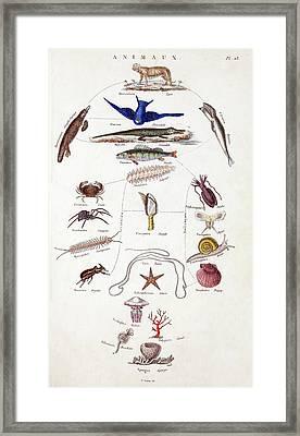 Pre-darwinian Taxonomy Confusion Framed Print by Paul D Stewart