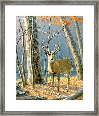 Pre-flight- Whitetail Buck Framed Print by Paul Krapf