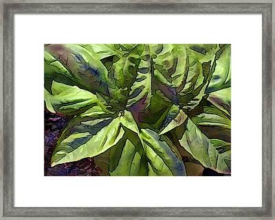 Pre Pesto Plant Framed Print by Elaine Plesser