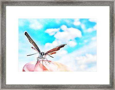 Precious Moment Framed Print by Marianna Mills