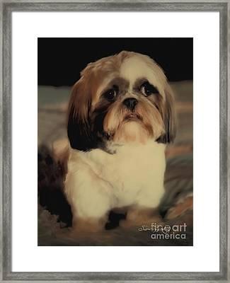 Precious Shih Tzu Framed Print by Susan  Lipschutz