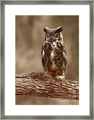 Predator In The Forest  Framed Print by Inspired Nature Photography Fine Art Photography