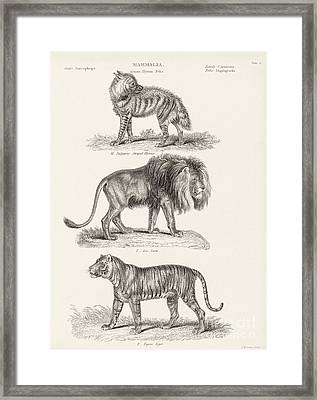 Predatory Mammals, 19th Century Framed Print by Middle Temple Library