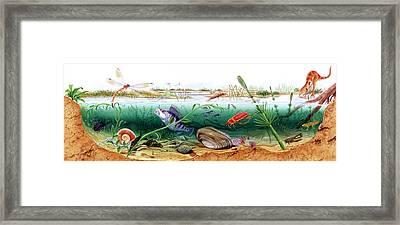 Prehistoric Watertight Ecosystem Framed Print by Deagostini/uig
