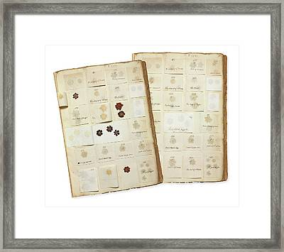 Pressed Auricula Specimens Framed Print by Natural History Museum, London